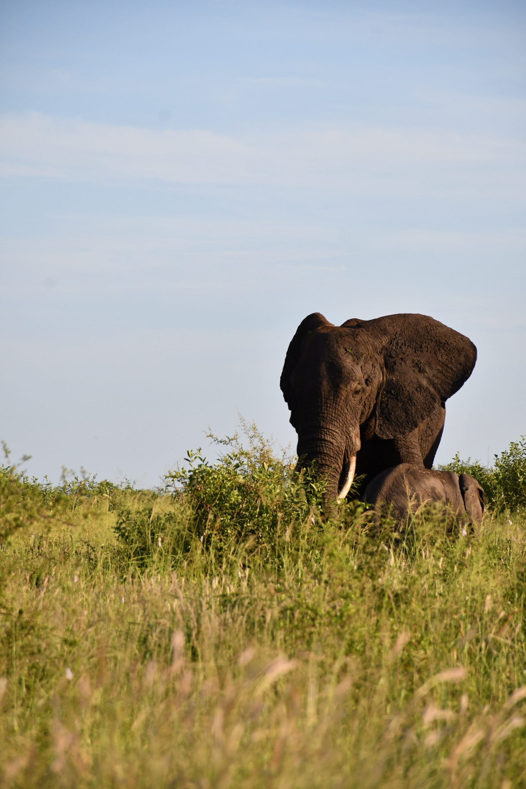 Kruger_elephants_sauvages_afrique_du_sud_safari_coucher_du_soleil