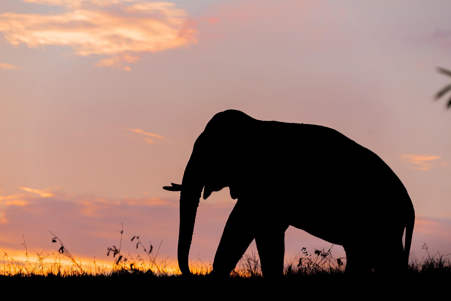 elephant_thailande_asie_sunset_coucher_soleil_ciel_ombre_kanchanaburi