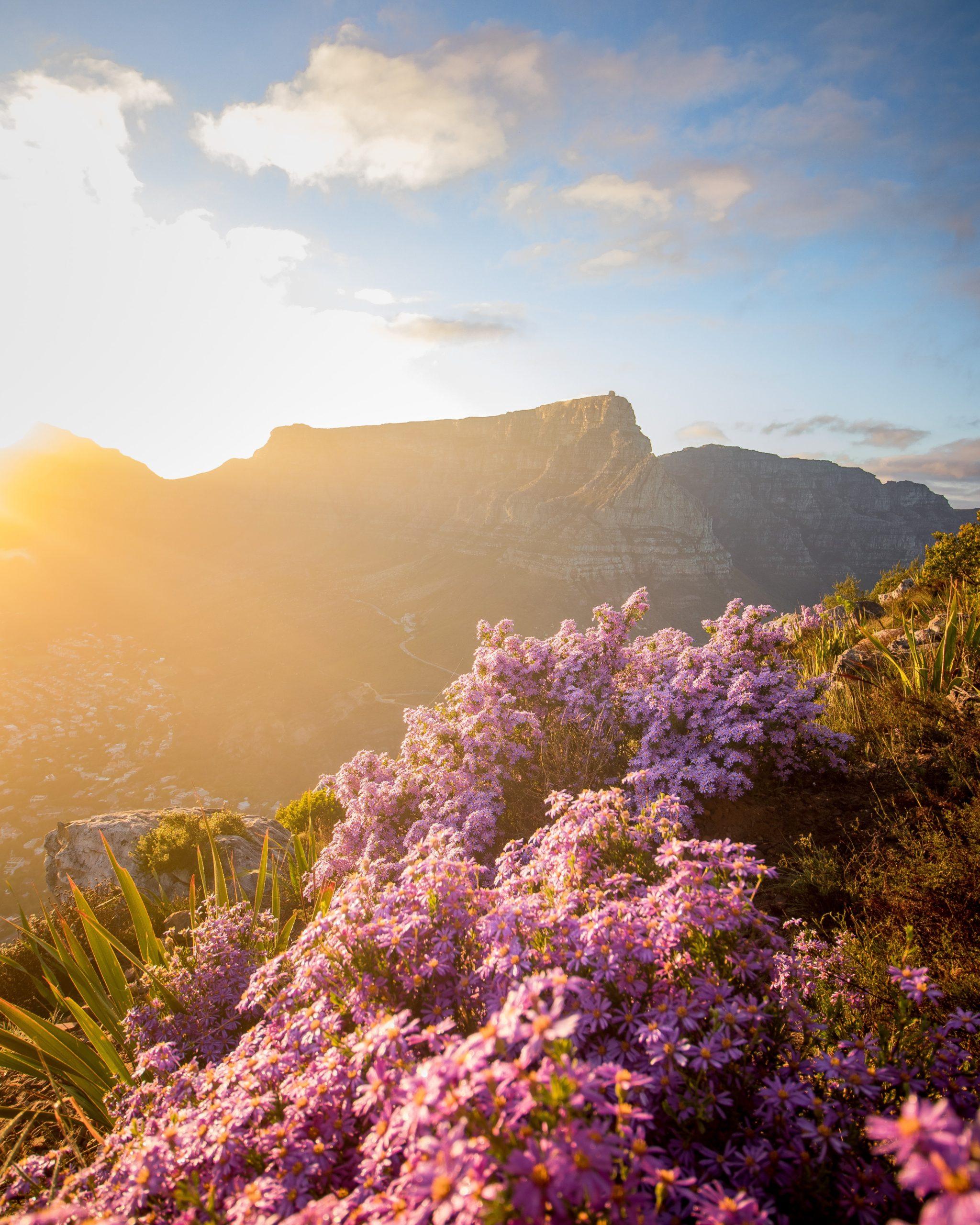 table_mountain_montagne_fleurs_sunrise_lever_du_soleil_lions_head_cape_town