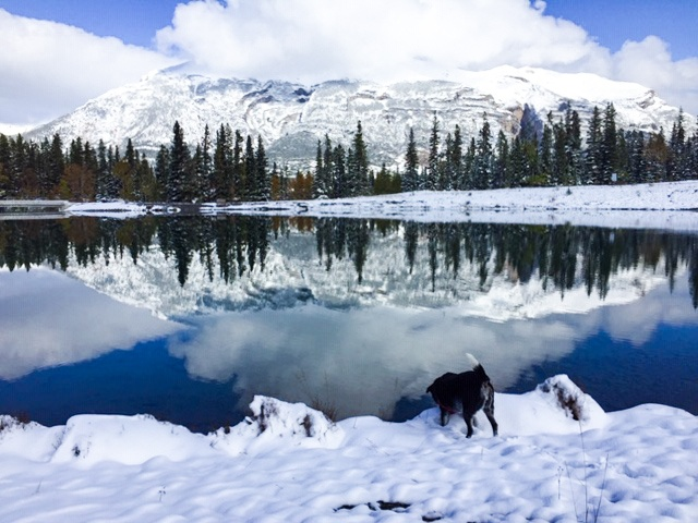 Paysage_hiver_neige_canada_banff_canmore_chien_alberta