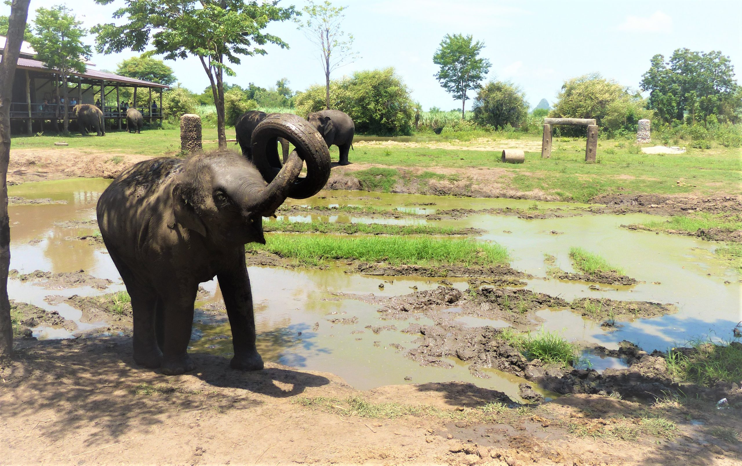 bain_boue_jeu_éléphant_bébé_thailande_elephants_world_kanchanaburi_asie