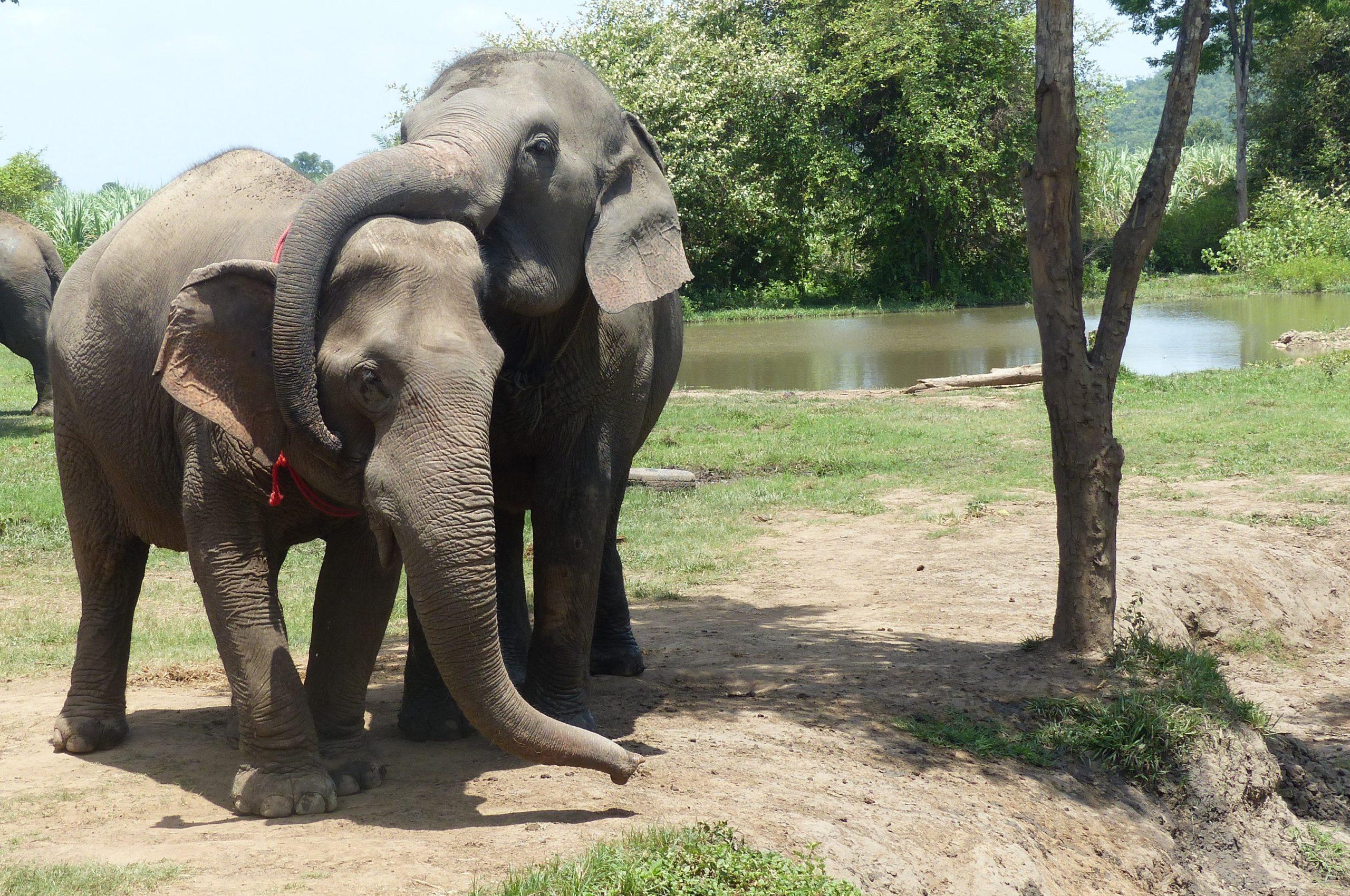 kanchanaburithailande_asie_elephants_jeu_trompes