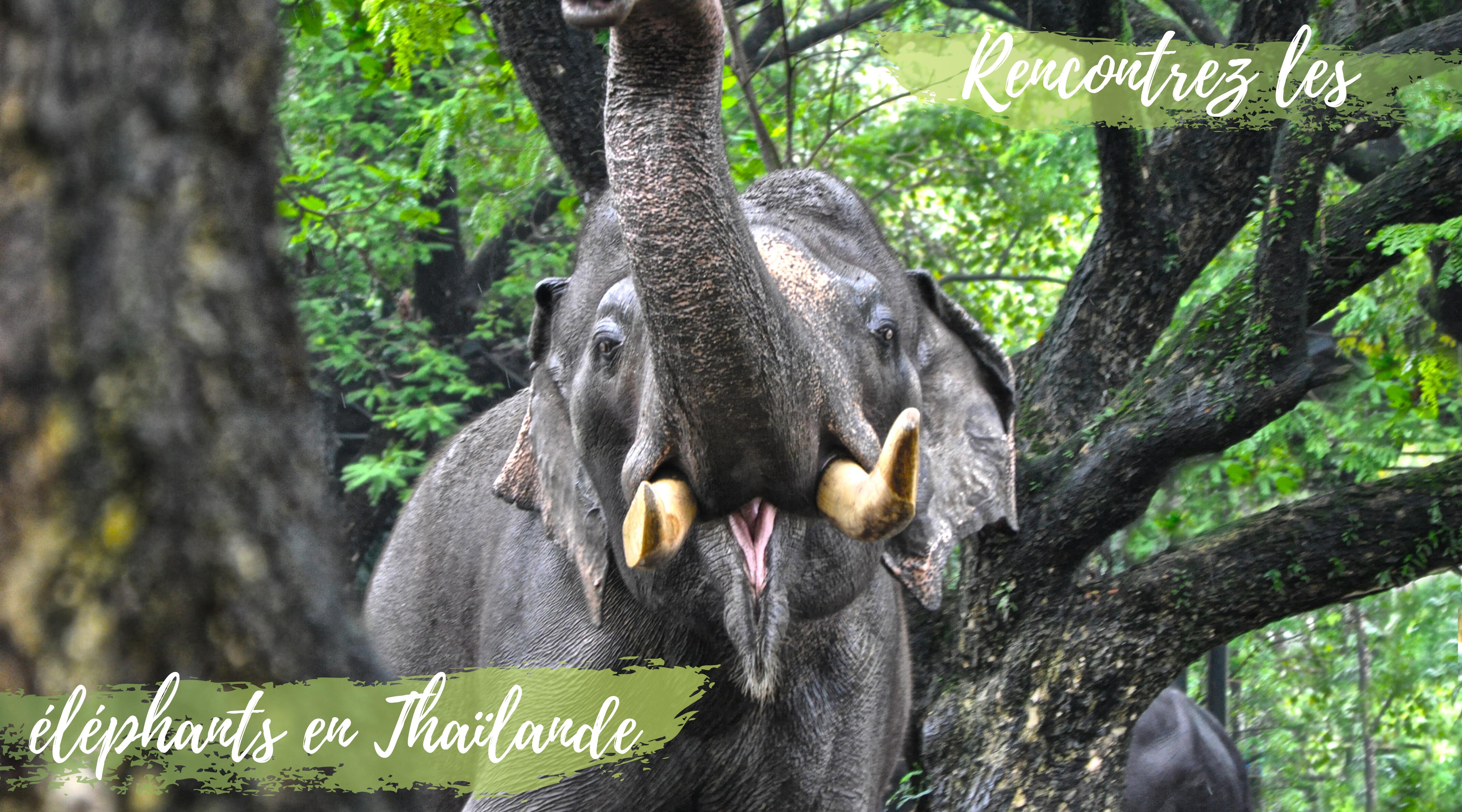 elephant_asie_thaïlande_nature