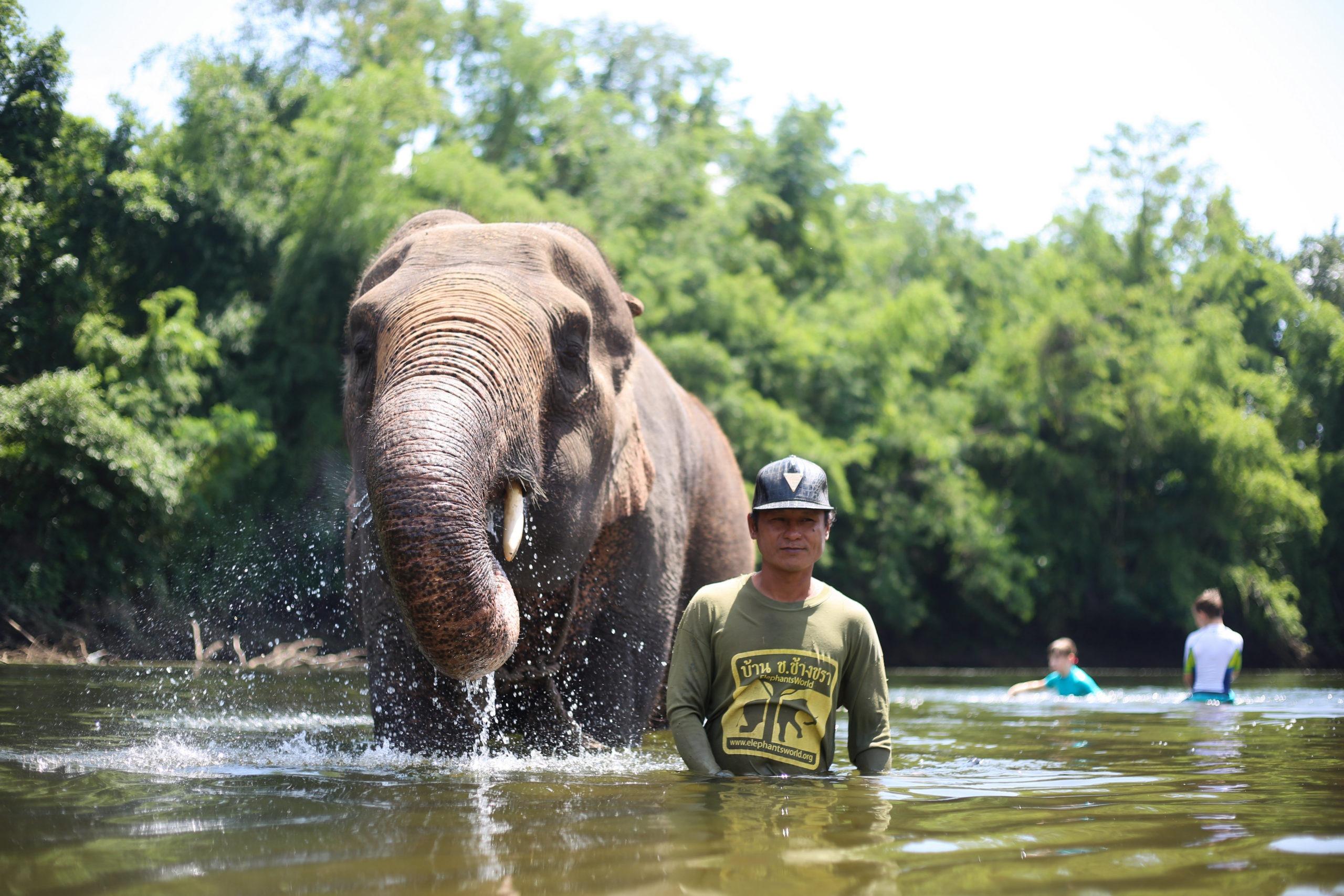 Kanchanaburi_thailande_elephants_volontaire_bain_rivière_mahout_asie