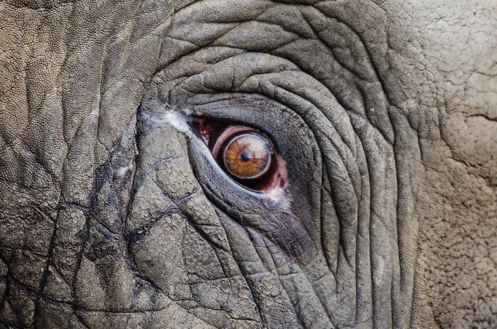 elephant_oeil_asie_thailande_regard