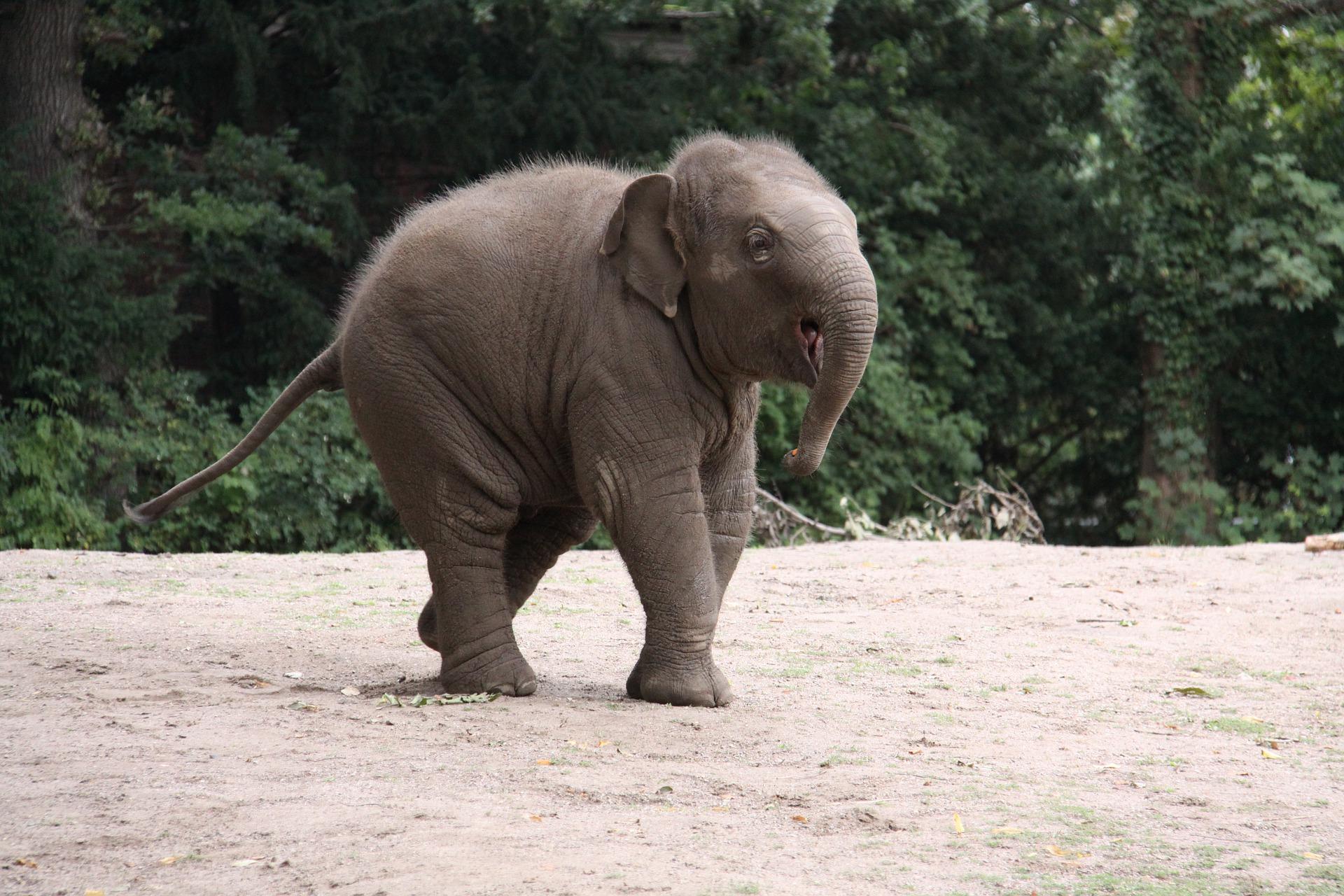 elephants_thailandes