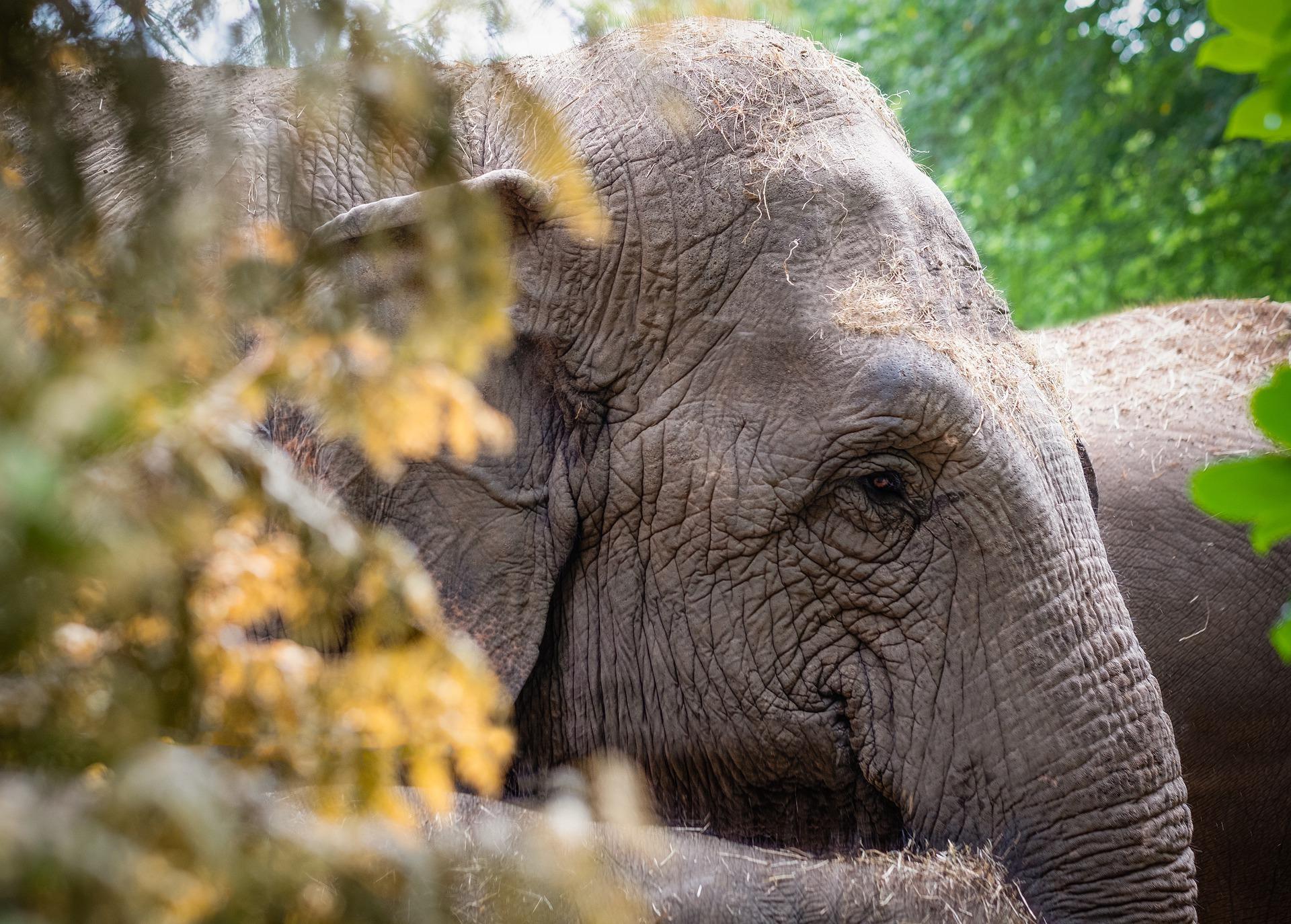 elephant_thaïlande_asie_chiangmai_sanctuaire