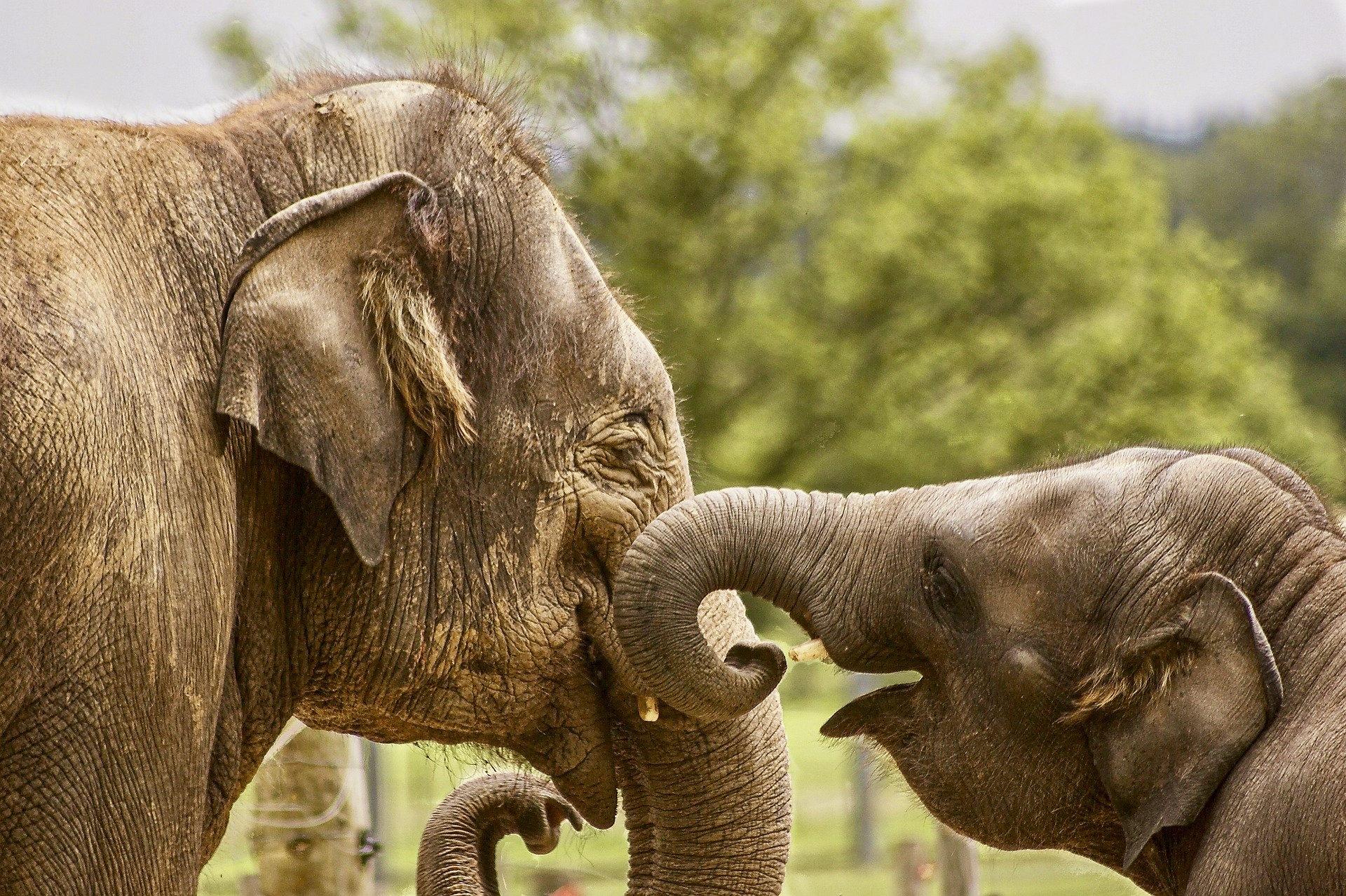 elephants_asie_thailande_bebe_maman_famille_jeu_trompe
