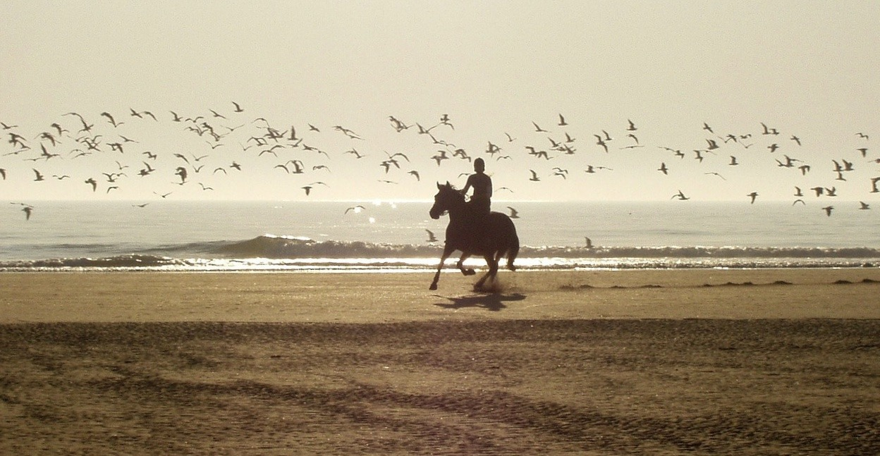 baie-de-somme-cheval