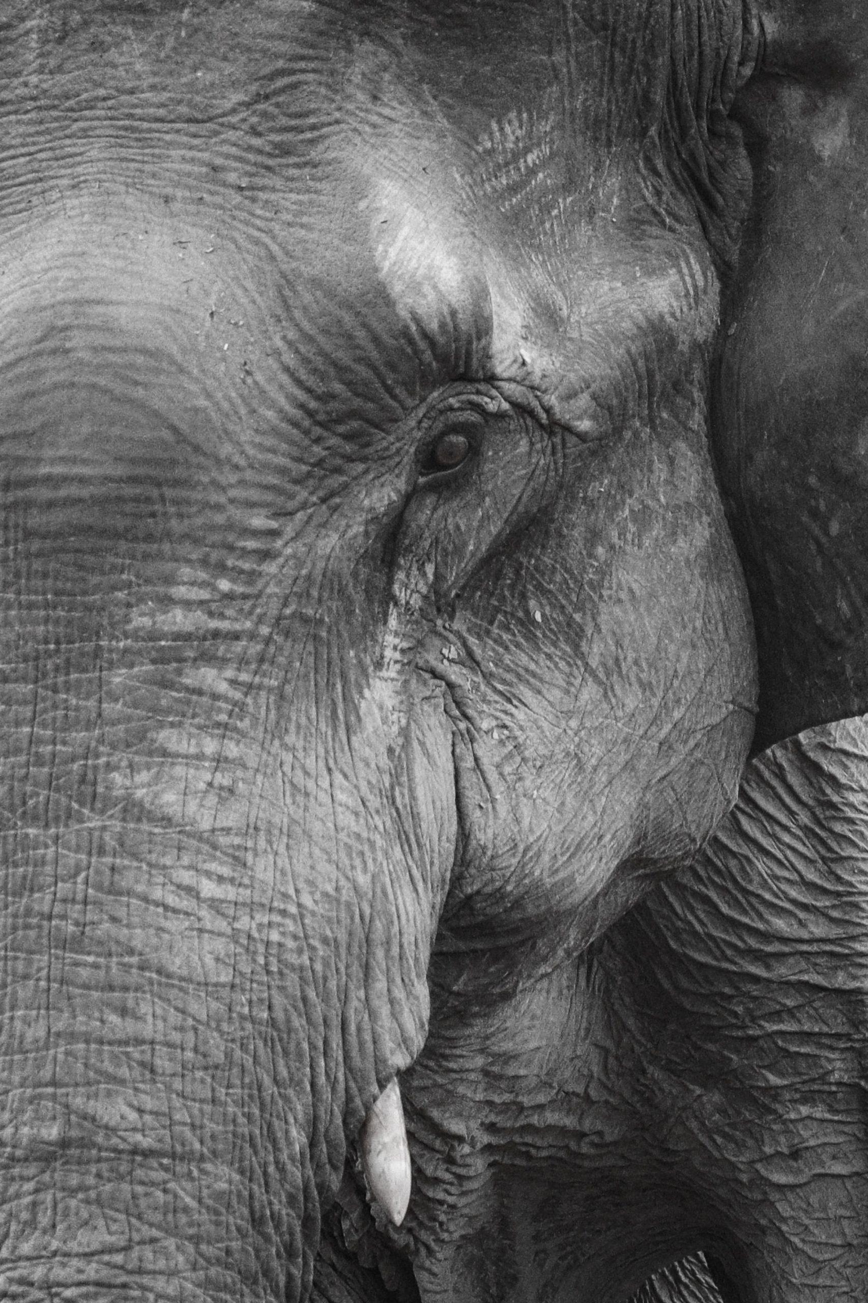 elephant_asie_thaïlande_défense