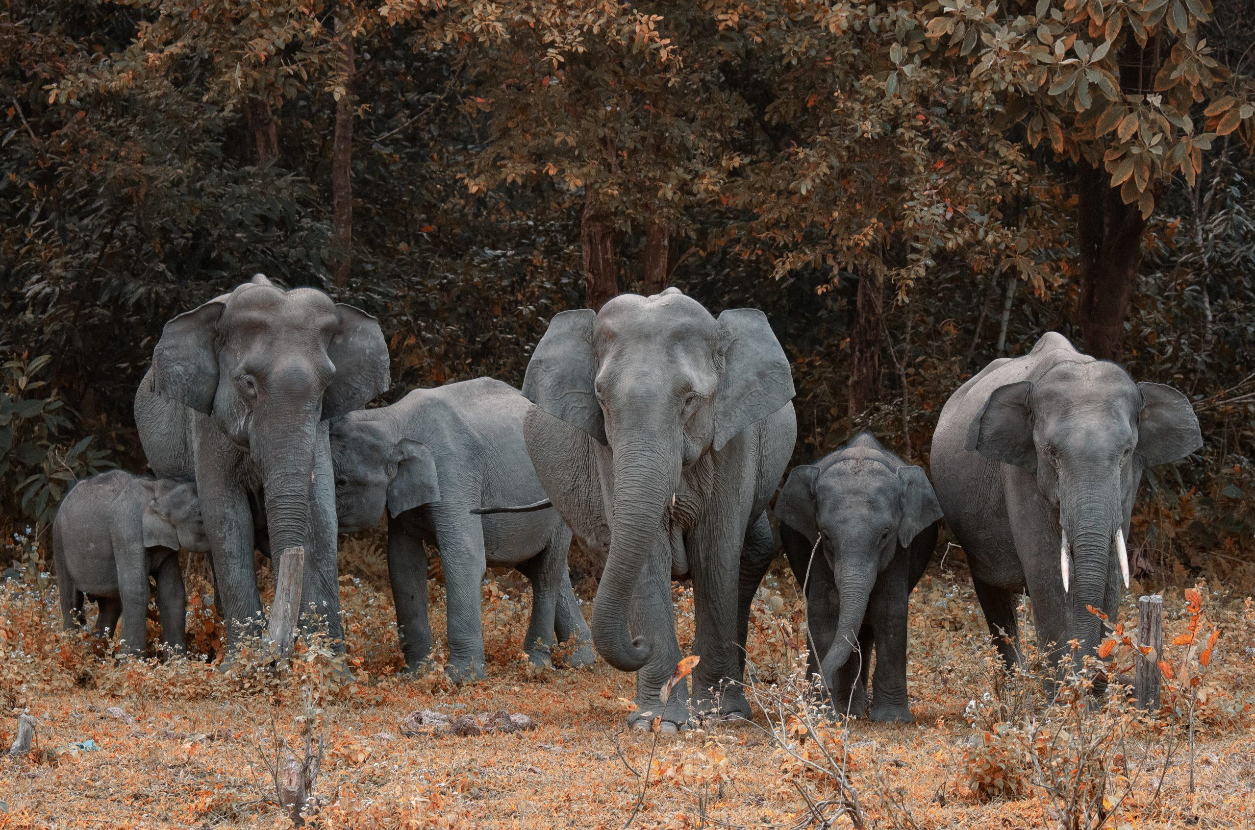 elephants_sauavges_thailande_asie_parc_natiional_khao_yai_bangkok_famille