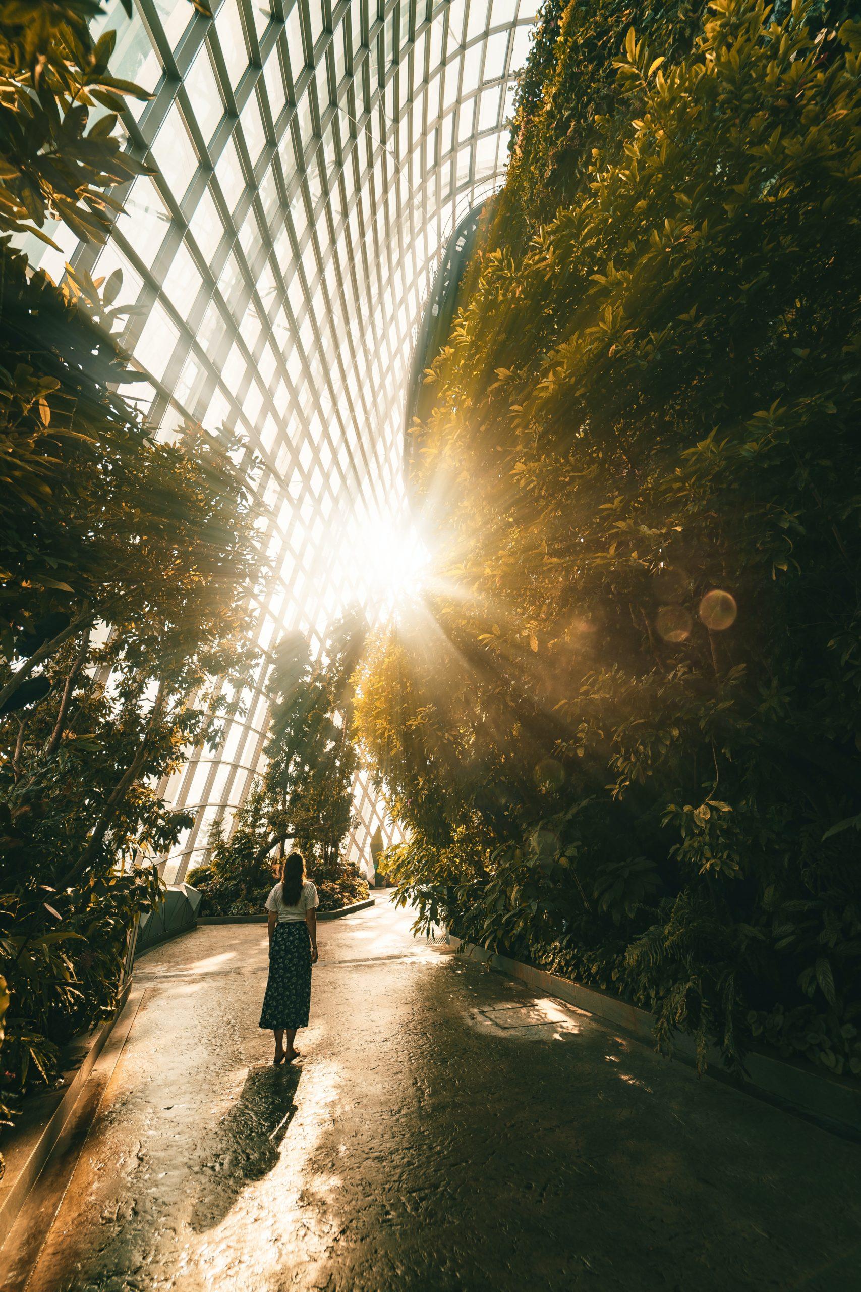 Singapour_cloud_forest_soleil_femme_serre_forêt