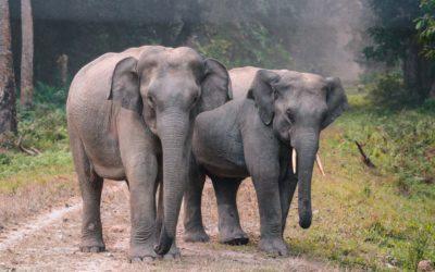 Voir les éléphants en Thaïlande : une solution éthique