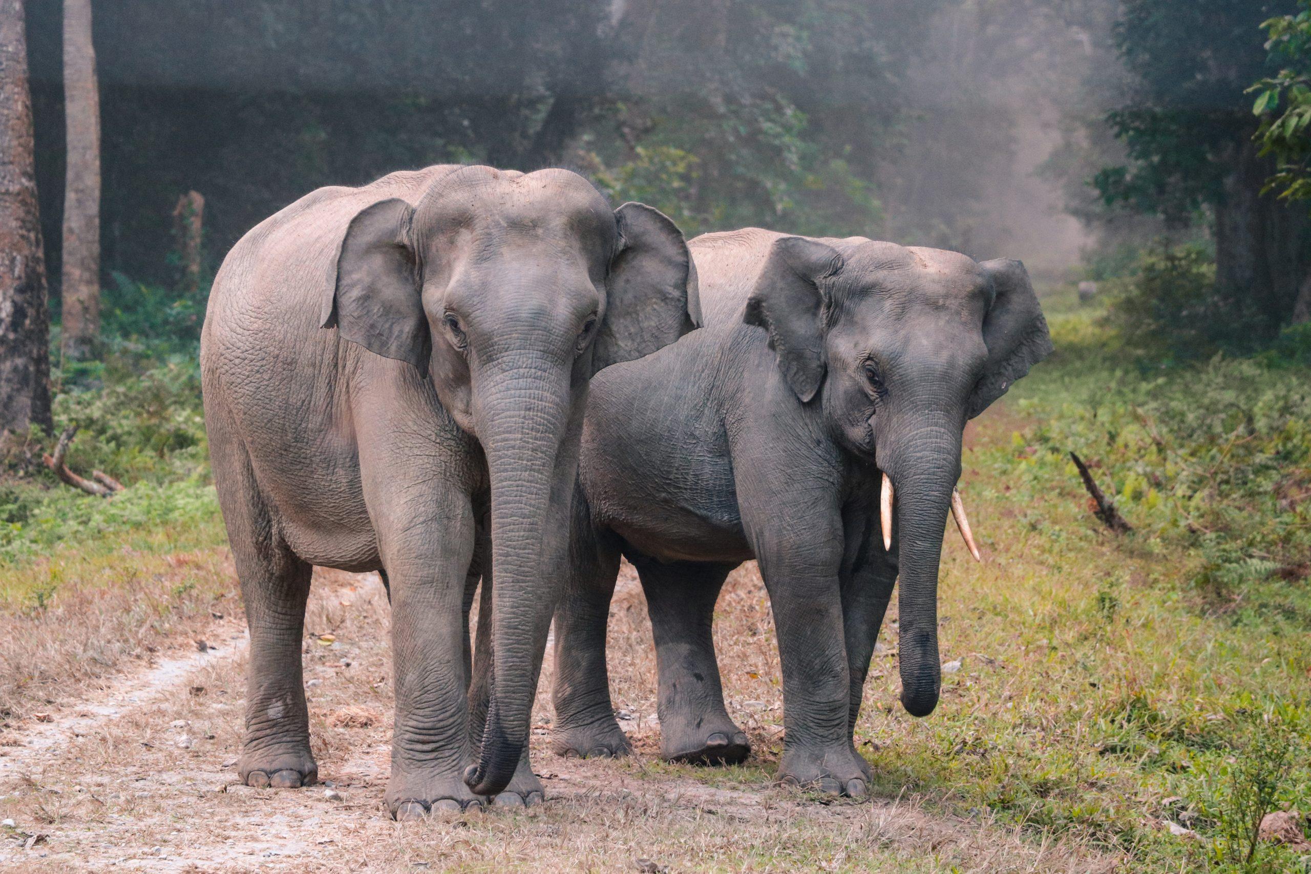 éléphants_asie_thaïlande_nature_sauvages_liberté