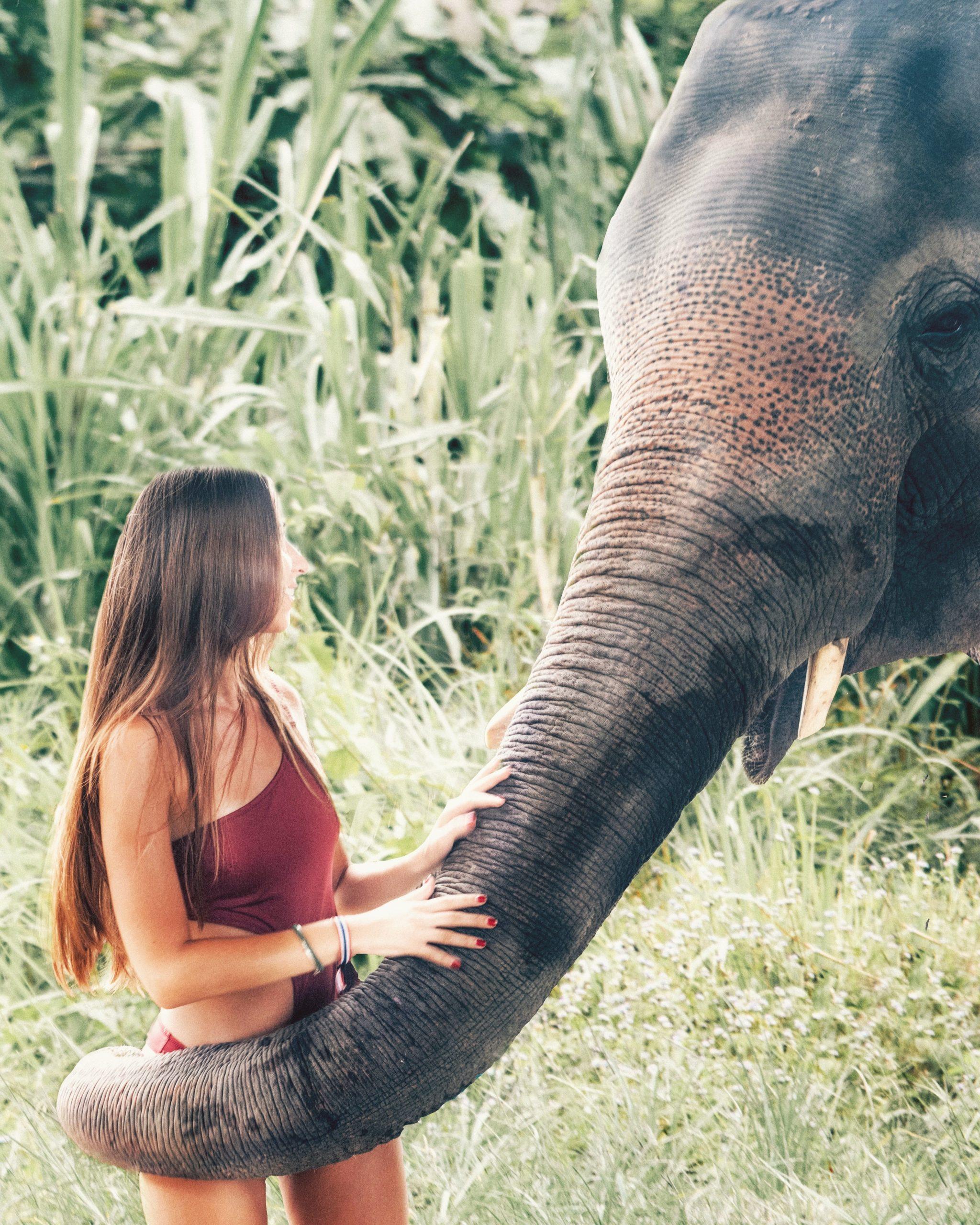 elephant_thailande_asie_fille_rencontre_sanctuaire_chiang_mai