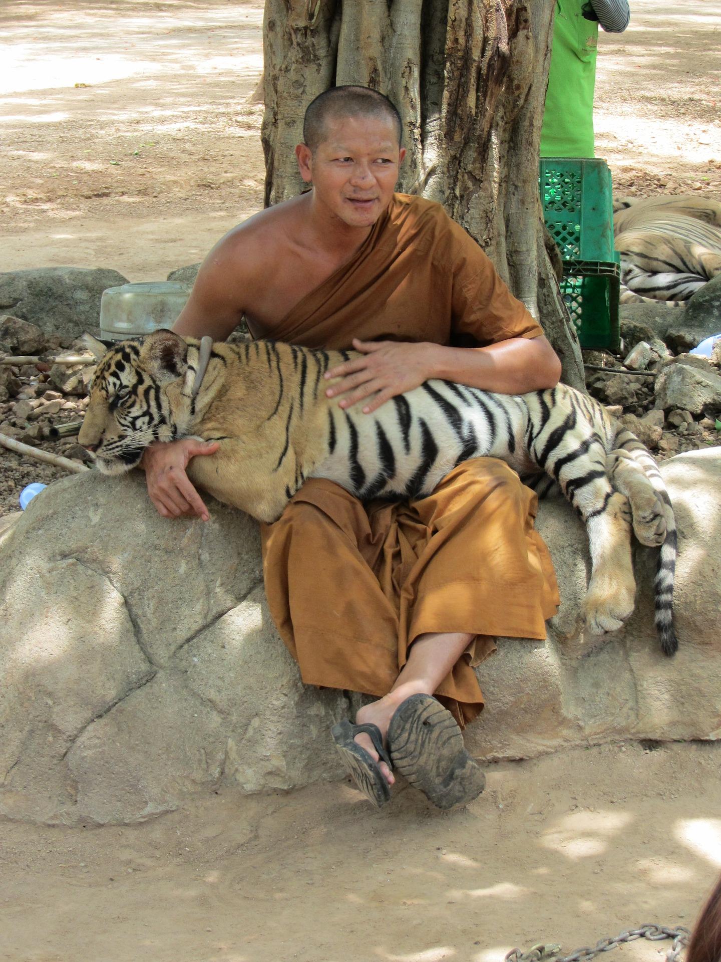 voir_tigre_thailande_sanctuaire_vérité_enfer_maltraitance_animale_tourisme