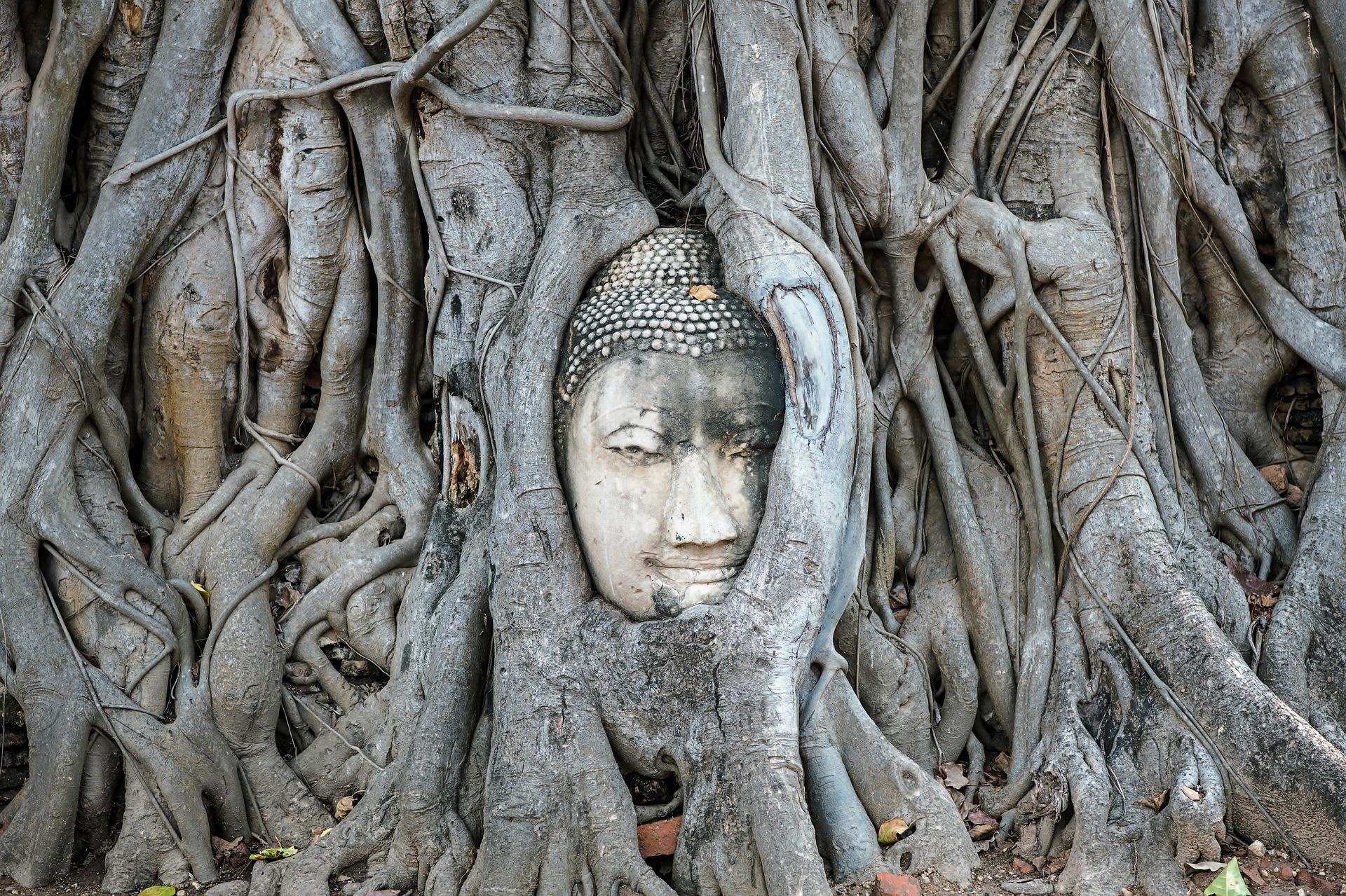 mahathat_tête_bouddha_racines_arbre_ayutthaya_khmer_thaïlande_asie_bangkok