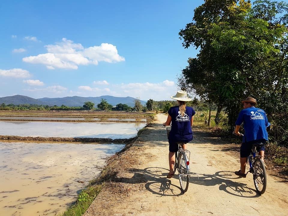 chiang-mai-thailande-travail-ferme